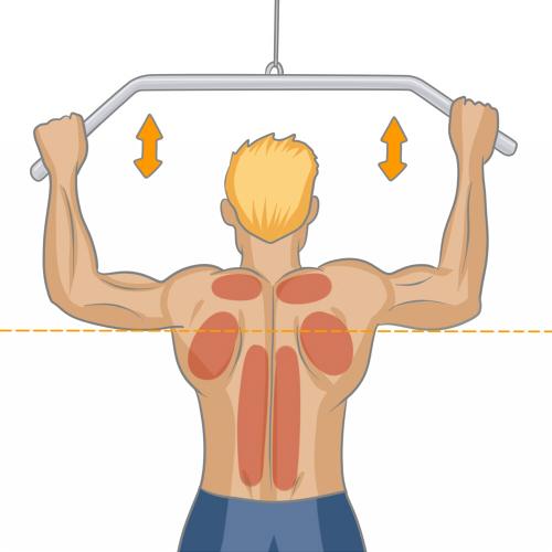 Exercice De Musculation Du Dos Programme D Entrainement